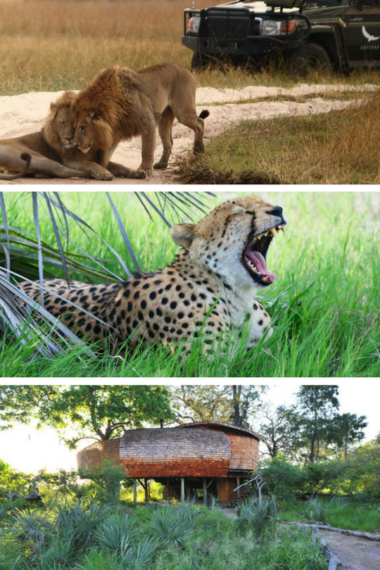 Sandibe-Okavango-Safari-Lodge7_Botswana_Cd-Mentiel-Magazine