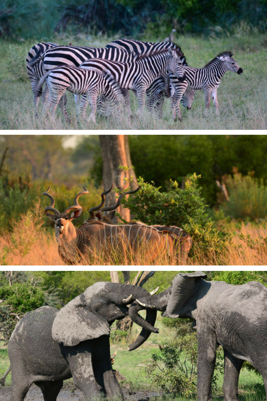 Sandibe-Okavango-Safari-Lodge8_Botswana_Cd-Mentiel-Magazine